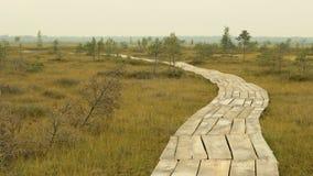Passaggio pedonale di legno nella riserva faunistica nazionale Giorno di autunno stock footage