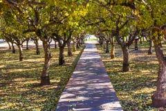Passaggio pedonale di legno rosso attraverso il boschetto degli alberi immagine stock libera da diritti