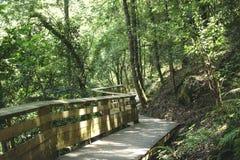 Passaggio pedonale di legno di zigzag trovato nel comune di Arouca Passaggi pedonali di Paiva a Aveiro, Portogallo fotografia stock libera da diritti