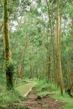 Passaggio pedonale in foresta Fotografia Stock