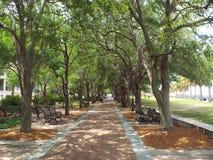 Passaggio pedonale negli alberi Fotografia Stock Libera da Diritti