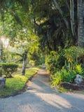 Passaggio pedonale nel parco nella mattina Immagini Stock Libere da Diritti