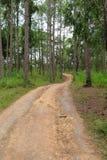 Passaggio pedonale nella foresta immagini stock