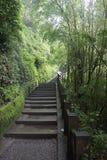 Passaggio pedonale nella foresta da aumentare alla montagna fotografia stock libera da diritti