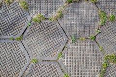 Passaggio pedonale senza cuciture piastrellato esagonale Grungy di TGarden fatto dei piatti esagonali Rotture dell'erba attravers Fotografia Stock