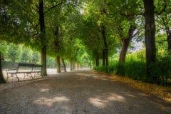 Passaggio pedonale, treeline fotografie stock