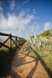 Passaggio pedonale variopinto sul bordo della costa atlantica con le piante tropicali Immagini Stock