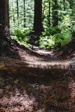 Passaggio pedonale verde e marrone del lavoro della foresta di escursione della traccia del percorso immagini stock