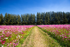 Passaggio pedonale verde fra il fiore dell'universo Immagine Stock