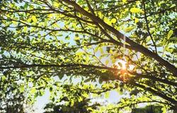 Passaggio verde degli ombrelli da parte a parte Fotografie Stock