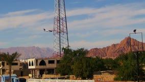 Passagierflugzeug in der Himmel-Landung auf dem Hintergrund von Bergen und Palmen in Ägypten stock video