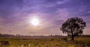 Passando a nuvem e o nascer do sol sobre o campo do arroz vídeos de arquivo