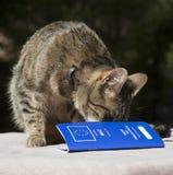 Passaporto dell'animale domestico e del gatto Fotografia Stock