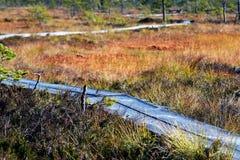 Passarelas através do pântano colorido do outono Foto de Stock Royalty Free