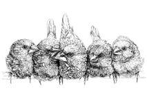 Passarinho japonês Ilustração do vetor Imagem de Stock Royalty Free