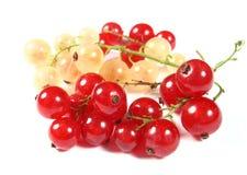 Passas de Corinto vermelhas e brancas frescas Imagens de Stock Royalty Free