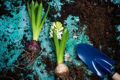 Passatempo de jardinagem que planta bulbos Imagens de Stock