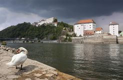 Passau. Swan by the Danube riverbank in Passau. Dark sky over castle of Passau and Veste Oberhouse in the distance stock images
