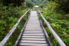 Passe no parque nacional do inthanon de Doi, Tailândia Fotografia de Stock Royalty Free