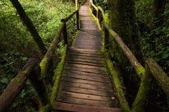 Passe no parque nacional do inthanon de Doi, Tailândia Fotografia de Stock