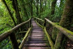 Passe no parque nacional do inthanon de Doi, Tailândia Imagens de Stock