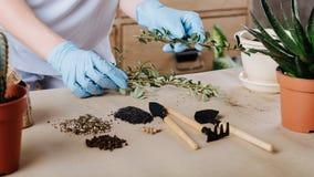 Passe-temps de jardinage de pots de plante verte de jardinier photos stock