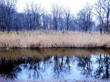 Passeggiata in anticipo, alberi che riflettono nell'acqua Fotografia Stock Libera da Diritti