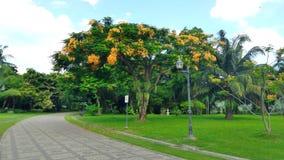 Passeggiata attraverso il fiore di pavone di fioritura Fotografia Stock