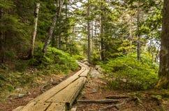 Passeggiata attraverso il legno Fotografie Stock