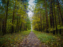 Passeggiata attraverso il legno di autunno immagine stock libera da diritti