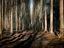 Passeggiata attraverso la foresta dei pioppi video d archivio