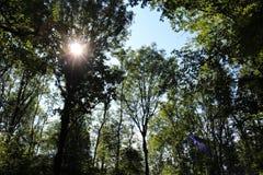 Passeggiata attraverso la foresta magica! fotografia stock