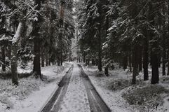 Passeggiata attraverso la foresta nevosa di inverno Fotografia Stock