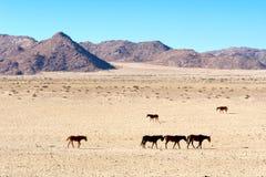 Passeggiata dei cavalli selvaggii in deserto Fotografia Stock Libera da Diritti