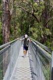 Passeggiata dei turisti la passeggiata della cima dell'albero in Walpole Nornalup, Australia occidentale Immagini Stock Libere da Diritti
