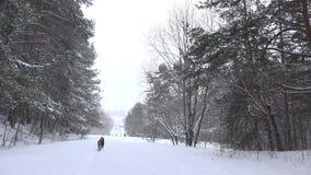 Passeggiata del cane nero in sentiero nel bosco innevato ad orario invernale 4K archivi video