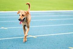 Passeggiata del cane in pista Fotografia Stock