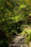 Passeggiata del fiume di Tarawera, Nuova Zelanda Fotografia Stock