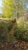 Passeggiata del terreno boscoso fotografia stock