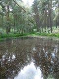 Passeggiata del terreno boscoso Fotografia Stock Libera da Diritti