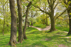 Passeggiata del terreno boscoso attraverso il campo di battaglia della collina 60 vicino a Ypres Immagine Stock