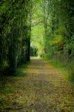 Passeggiata del terreno boscoso in autunno Fotografie Stock Libere da Diritti