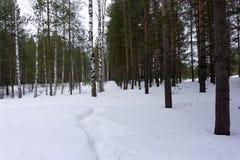 Passeggiata del tronco dei fiocchi di neve della Siberia dell'ombra della foresta di inverno Immagini Stock