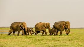 Passeggiata dell'elefante Fotografia Stock Libera da Diritti
