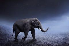Passeggiata dell'elefante di Sumatran sul deserto Fotografia Stock Libera da Diritti