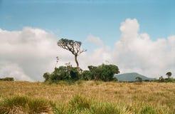 Passeggiata dell'estremità dei mondi nello Sri Lanka Fotografie Stock