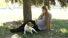 Passeggiata della donna con il cane in parco Ragazza incinta Donna incinta in sosta stock footage