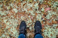 Passeggiata della foresta in autunno Piedi in scarpe da tennis su fondo di terra muscosa fotografia stock