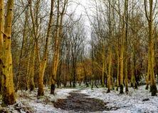 Passeggiata della foresta un giorno nevoso immagine stock libera da diritti