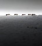 Passeggiata della formica sulla parete Fotografie Stock Libere da Diritti